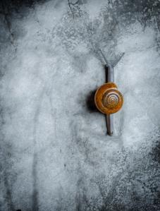Snail slow
